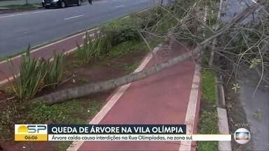 Ventania e queda de árvores na Zona Sul da Capital - Na Vila Olímpia, uma dessas árvores ocupa a ciclovia e uma faixa da rua das Olimpíadas.