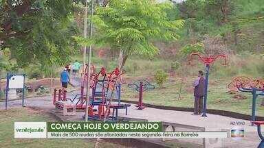 """Começa nesta segunda-feira o projeto """"Verdejando"""" - Começa nesta segunda-feira uma campanha da TV Globo para incentivar a população a lançar um novo olhar sobre o verde urbano. É o """"Verdejando"""", um projeto para estimular o plantio de árvores e que vai realizar várias atividades educativas e culturais ligadas ao meio ambiente. A campanha foi criada em São Paulo e agora será estendida também a Belo Horizonte, Brasília e Recife."""