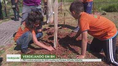 'Verdejando': pela primeira vez em Belo Horizonte, projeto discute a importância do verde - Quinhentas mudas nativas brasileiras são plantadas na capital mineira.