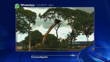 Moradores de Fernandópolis se revoltam com corte de árvores perto da rodoviária - Em Fernandópolis (SP), moradores estão revoltados com uma situação. Uma máquina está arrancando árvores numa calçada - bem na entrada da rodoviária da cidade. Segundo os moradores são ipês que estavam naquele espaço há mais de 20 anos.
