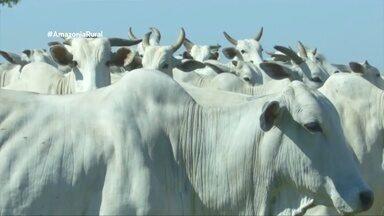 Parte 2: Casos de raiva bovina deixam autoridades em alerta em Vilhena - Uma barreira sanitária foi feita em uma raio de 12km.