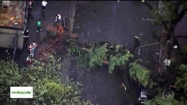Chamados por conta de queda de árvores foi dez vezes maior no primeiro semestre deste ano - De janeiro a junho de 2017, a prefetiura recebeu 570 solicitações para recolher árvores ou galhos caídos.