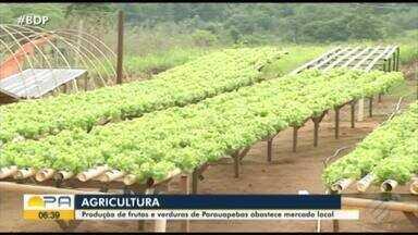 Agricultores de Parauapebas estão animados com a safra - A produção local abastece mercados e garante a merenda escolar dos estudantes.