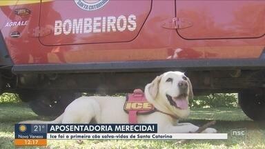 Primeiro cão salva-vidas de SC é aposentado pelos bombeiros - Primeiro cão salva-vidas de SC é aposentado pelos bombeiros