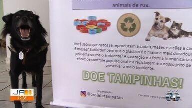 Campanha arrecada tampas de plástico para vender e conseguir dinheiro para castrar cães - Animais em situação de rua são os beneficiados pela ação do grupo.