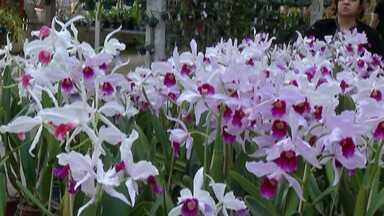 Festival das Orquídeas termina neste domingo em Mogi das Cruzes - O evento é realizado no bairro do Itapeti.