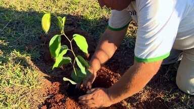 Recuperação de nascentes através do plantio de árvores - Projeto da ONG De Olho nos Olhos incentiva produtores rurais a cuidarem dos rios com ajuda da flora.