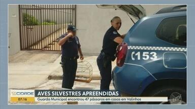 Guarda Municipal de Valinhos apreende pássaros silvestres em duas casas - Em uma delas estavam 36 pássaros.