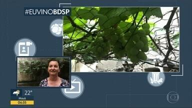 #EuViNoBDSP: Telespectadora relembra reportagens do Quadro Verde - Zélia, de Diadema, mostra as uvas que tem em casa
