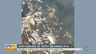 Quantidade de peixes mortos assusta pescadores na represa do Salto Grande, em Americana - Prefeitura e Polícia Ambiental afirmam que a responsabilidade sobre a represa é da Cetesb.