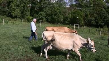 Assista ao bloco 02 do Caminhos do Campo do dia 06 de janeiro de 2018 - Pequenos produtores paranaenses se adequam às normas para produzir e comercializar queijo feito com leite crú