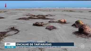 Lixo jogado na bar e carros circulando nas praias causam a morte de tartarugas no PI - Lixo jogado na bar e carros circulando nas praias causam a morte de tartarugas no PI