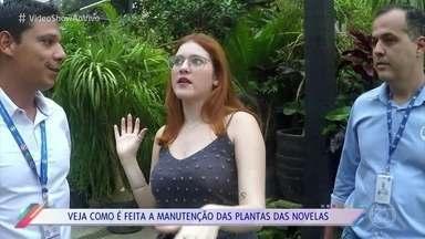 Veja como é feita a manutenção das plantas das novelas - Ana Clara Lima visita o plantário dos Estúdios Globo, onde paisagistas cuidam das plantas reais que você vê na ficção