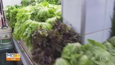 Chuvas de Dezembro afetam preço de legumes e verduras em MG - Consumidores estão com dificuldade para fazer o sacolão.