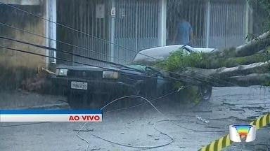 Veja mais informações sobre a chuva em São José - No Jardim das Indústrias, teve árvore que caiu.