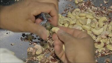 Em Ocara, cooperativa produz castanha de caju para exportação - Confira mais notícias em g1.com.br/ce