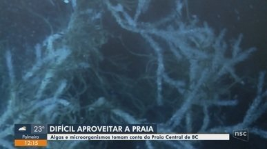 Algas e microorganismos deixam a Praia Central de Balneário Camboriú com coloração escura - Algas e microorganismos deixam a Praia Central de Balneário Camboriú com coloração escura
