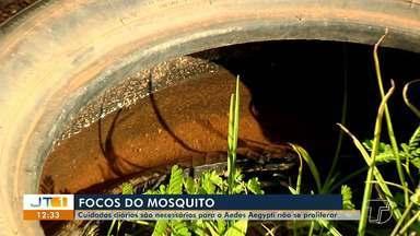 Focos de mosquito Aedes: Dois casos de febre chikungunya são registrados em Santarém - Você tem limpado seu quintal corretamente para evitar que os mosquitos se proliferem? Veja que cuidados tomar para se proteger do mosquito Aedes aegypti.