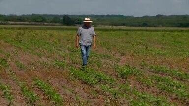 Chuvas irregulares causam prejuízos para produtores em São Gonçalo do Piauí - Chuvas irregulares causam prejuízos para produtores em São Gonçalo do Piauí