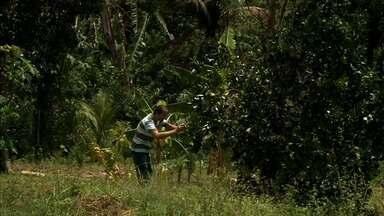 Projeto estuda melhorias para produção de frutas em Santana do Mundaú - Novas técnicas estão sendo testadas para melhorar a produtividade.