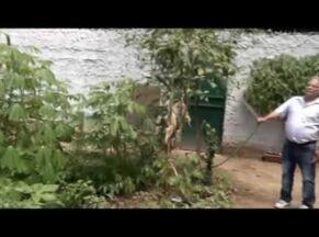 Veja dicas sobre como aproveitar o quintal de casa para plantar hortas - É possível conseguir até renda extra com plantações menores.