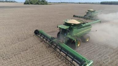 Colheita de soja avança e revela impacto da falta de chuvas em MS - Produtor faz a médias das áreas colhidas e percebe o quanto a falta de chuva comprometeu a safra.