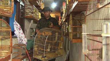 Quase 200 aves silvestres são resgatadas de cativeiro no Parque Meia Lua - Algumas das aves resgatadas são da espécie Tico-tico-rei e Pixoxó, que estão ameaçadas de extinção.
