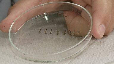 Três novos focos do mosquito Aedes Aegypti são encontrados em Rio Grande - Secretaria de Saúde pede que moradores reforcem ações preventivas para evitar água parada.