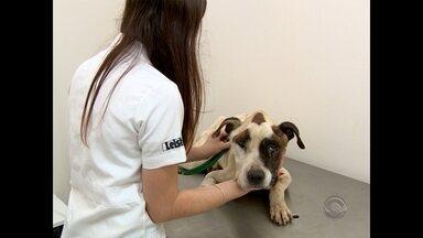 Abandono de cachorros preocupa grupo de voluntários em Santa Maria,RS - Nos últimos dias 3 animais foram resgatados próximos ao aterro sanitário