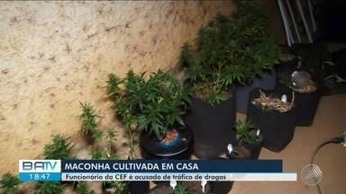 Bancário é preso acusado de tráfico de drogas em Cândido Sales - O homem cultivava a erva sem autorização dentro de casa.