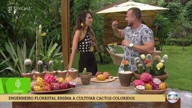 Murilo Soares ensina a cultivar cactos coloridos - Engenheiro Florestal usa pitayas para enxertar os cactos coloridos
