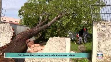 Prefeitura de São Paulo faz alerta sobre quedas de árvores - Governo pensa em mudar regras para poda para evitar as quedas, que causaram tantos transtornos na cidade no mês de fevereiro. Número de raios registrados durante tempestades também tem aumentado