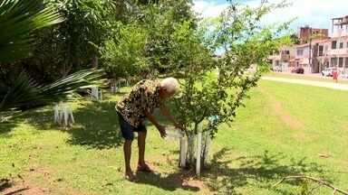 Aposentado planta mais de 200 árvores pelas ruas de Vitória - O aposentado Antônio dos Santos cuida de todo processo, do preparo das mudinhas até a plantação e a rega. Um amor que dá gosto de ver.