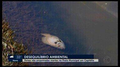 Peixes são encontrados mortos na Praia Municipal em Capitólio - Em outro trecho do Rio Piumhi, peixes estavam na superfície aparentemente em busca de oxigênio. Prefeito afirma que esgoto doméstico é despejado na água, mas diz que medidas serão tomadas para melhorar a situação.