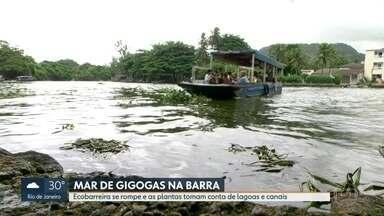 Ecobarreira se rompe no Canal de Marapendi - Lixo e gigogas se espalharam pela Lagoa da Tijuca depois de rompimento.