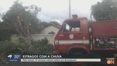 Chuva derruba ao menos 15 árvores em Araraquara - Segundo a Defesa Civil, todos os problemas foram resolvidos.