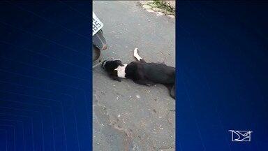 Motorista é preso por amarrar e arrastar cachorro por ruas em Imperatriz - Pedro Barbosa Miranda foi preso por maus tratos.