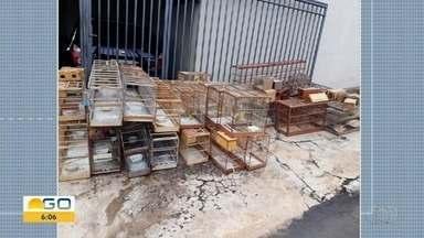 Polícia apreende 53 pássaros silvestres em casas de Rio Verde - Dois homens foram detidos, mas liberados em seguida após depoimento.
