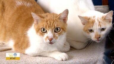 Ação do MPE leva ao recolhimento de mais de 60 gatos, em Osvaldo Cruz - Animais estavam na casa de uma pessoas que morreu e agora devem ser adotados.