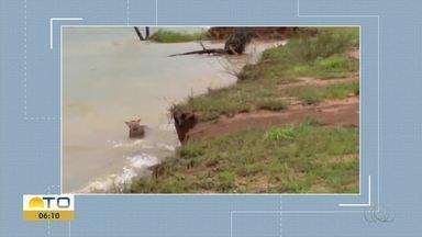Onça parda é vista se refrescando nas águas da Praia de Luzimanges - Onça parda é vista se refrescando nas águas da Praia de Luzimanges