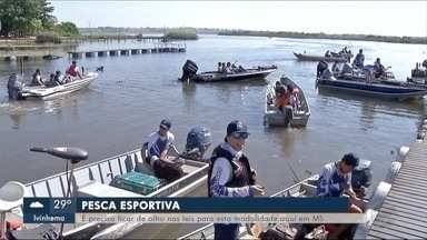 Rios de MS que ficam na divisa com SP atraem muito turistas, mas eles desconhecem as leis - Segundo a PMA, muitos turistas que vão pescar nos rios da Bacia do Paraná desconhecem as leis de Mato Grosso do Sul.