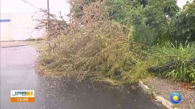 Vento forte derruba árvore no João Agripino, em João Pessoa - Ao vivo, o JPB 1 mostrou a situação.