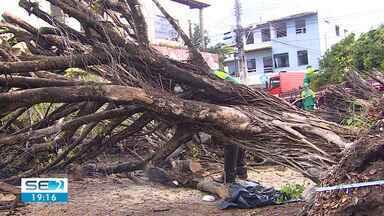 Ventania causou transtornos em diversas áreas da capital - Árvores caíram e moradores de um condomínio no Bairro 17 de março precisaram ser retirados.