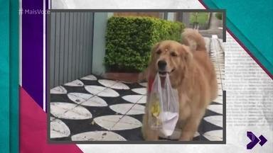 Cadelinha virou celebridade na internet depois de vídeos indo buscar pão na padaria - O dono de Mel, Reinaldo, explica que a cachorrinha está sempre ao seu lado, mas o vídeo fez sucesso por parecer que ela anda sozinha pela cidade