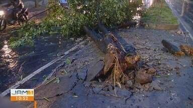 Van derruba árvore e causa congestionamento na Av. Ephigênio Salles, em Manaus - Acidente aconteceu por volta de 5h30 desta segunda-feira. Ninguém ficou ferido.