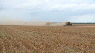 Colheita de soja para por exceto de chuvas em Regeneração - Colheita de soja para por exceto de chuvas em Regeneração