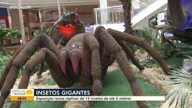 Exposição de insetos gigantes pode ser vista em shopping da capital - A exposição é gratuita; veja como visitar.