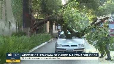 Árvore cai em cima de carro na zona sul de SP - Motorista teve apenas um corte na mão; blindagem teria evitado tragédia