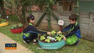 Horta em escola de Ponta Grossa estimula alimentação saudável entre crianças - Alunos contam que passaram a comer mais verduras depois que projeto começou.