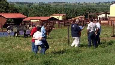 Criadores das raças Gir e Girolando se reúnem em Ituiutaba - Evento permitiu conhecer mais sobre as pesquisas com estas raças. E animais desenvolvidos com investimento em genética foram expostos para venda.
